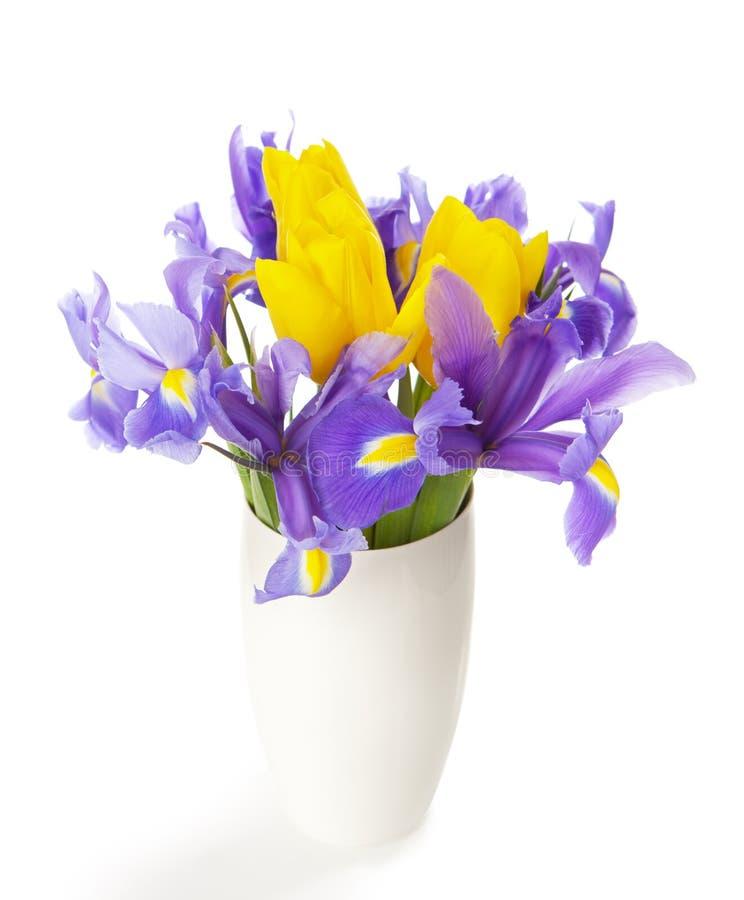 Blenden und Tulpen stockfotos