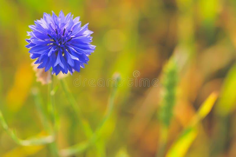 BLEU-bloem dichte omhooggaand met bloss groene achtergrond stock foto's