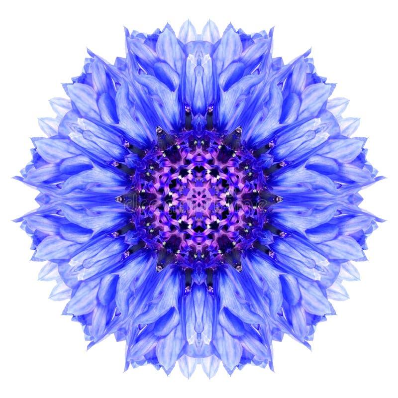 Bleuet bleu Mandala Flower Kaleidoscope Isolated sur le blanc photographie stock libre de droits