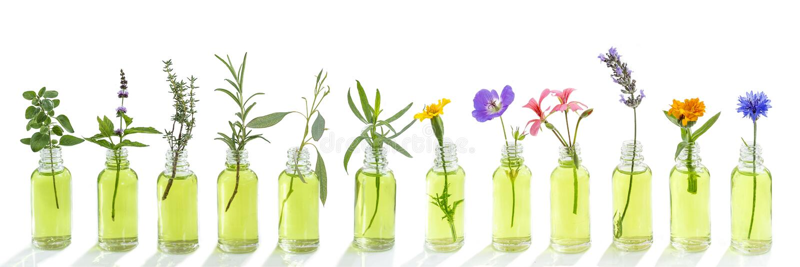Bleuet panoramique de fleurs d'huile essentielle, eucalyptus, estragon, géranium, géranium, lavande, menthe, dinde d'oeillet, ori image libre de droits