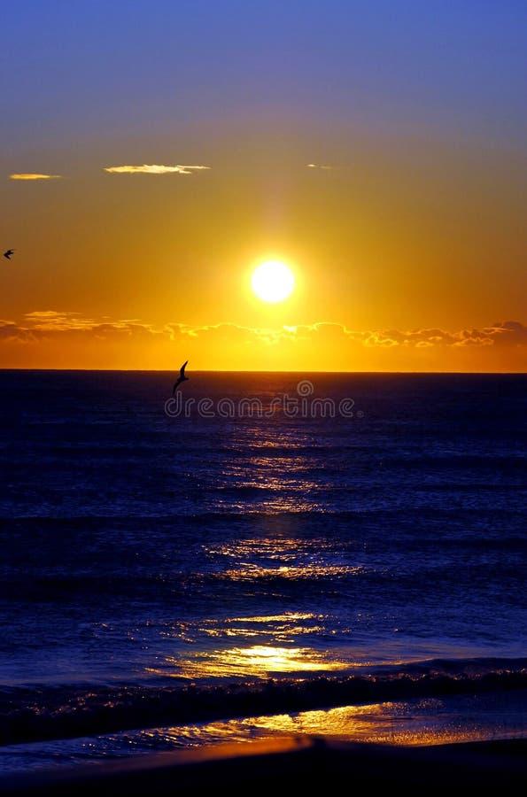 Bleus d'océan et d'oiseau photo libre de droits