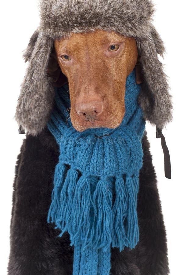 Bleus de l'hiver photographie stock