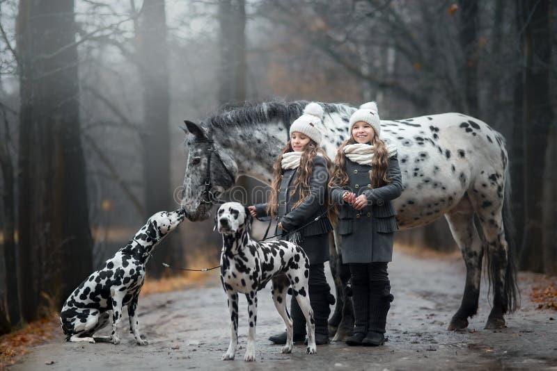 Bliźniak dziewczyn portret z Appaloosa koniem i Dalmatyńskimi psami zdjęcie royalty free