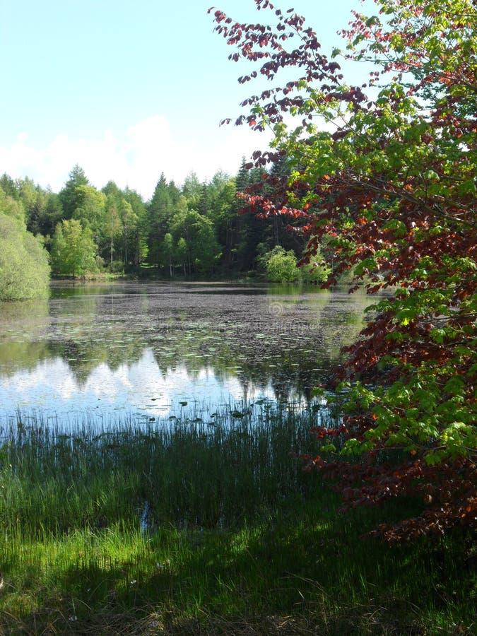 Blick auf den schottischen Teich während eines schönen sonnigen Nachmittags lizenzfreies stockbild