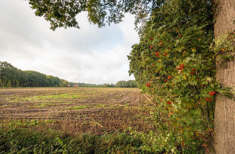 Blick auf ein Maisstockfeld in der Herbstsaison stockfoto