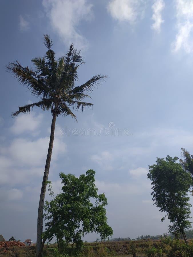 Blick auf Kokospalmen mit Blick auf den blauen Himmel lizenzfreies stockbild