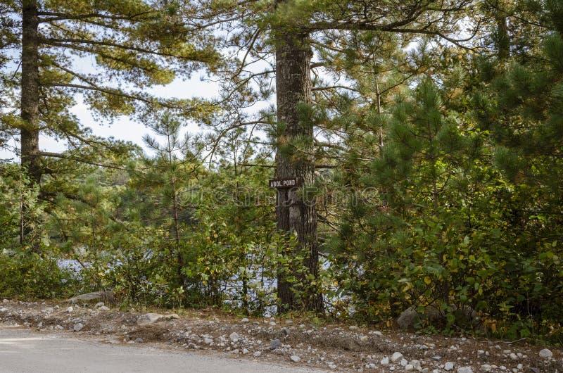 Blick von Abol Pond in Baxter State Park lizenzfreies stockfoto