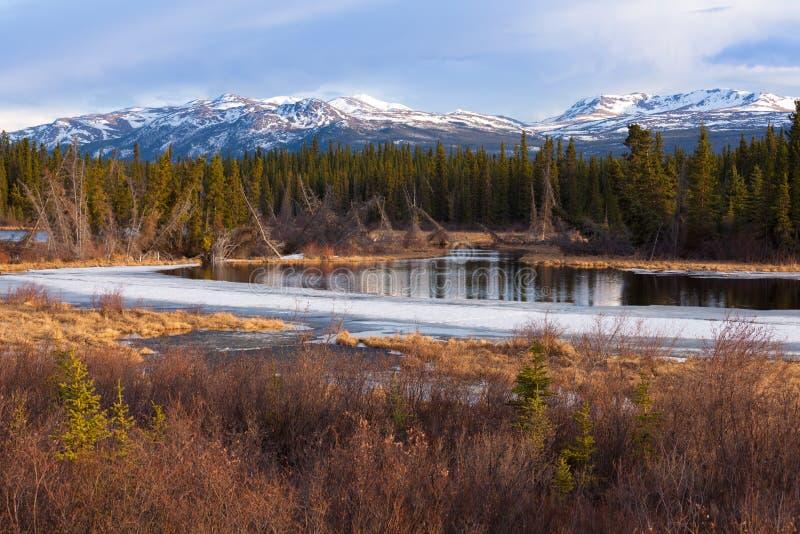 Blidväder Kanada för vår för träsk för Yukon taigavåtmark arkivbild