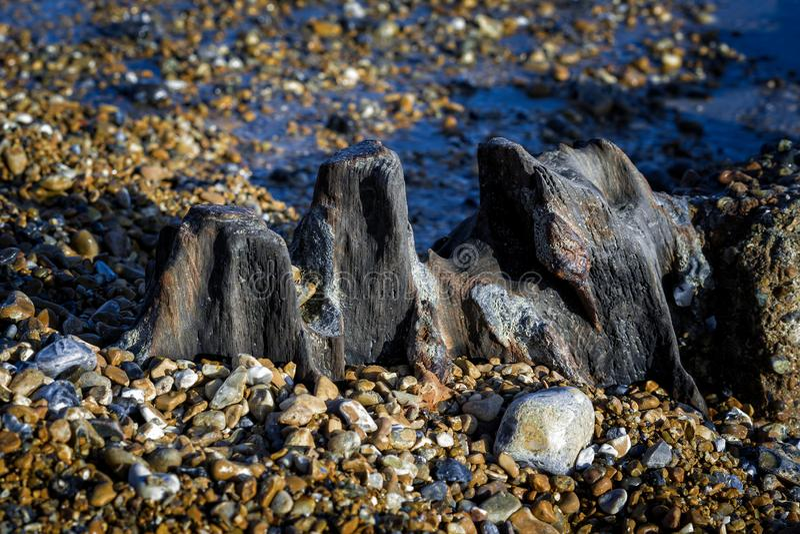 Blijft van een oude houten golfbreker in Eastbourne royalty-vrije stock fotografie