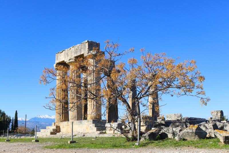 Blijvend kolommen van Tempel van Apollo in oude die Corinth Griekenland met boom in voorgrond en sneeuw mountians in de afstand w stock fotografie