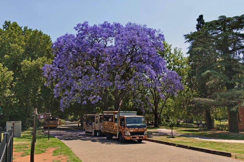 Blik van de dierentuin van Johannesburg, Zuid-Afrika stock afbeeldingen