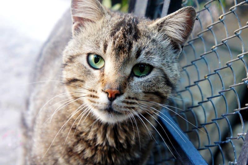 Blik van een volwassen daklozen bevlekte kat stock afbeelding