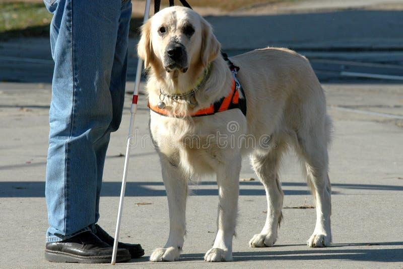 blind hund hans man royaltyfri foto