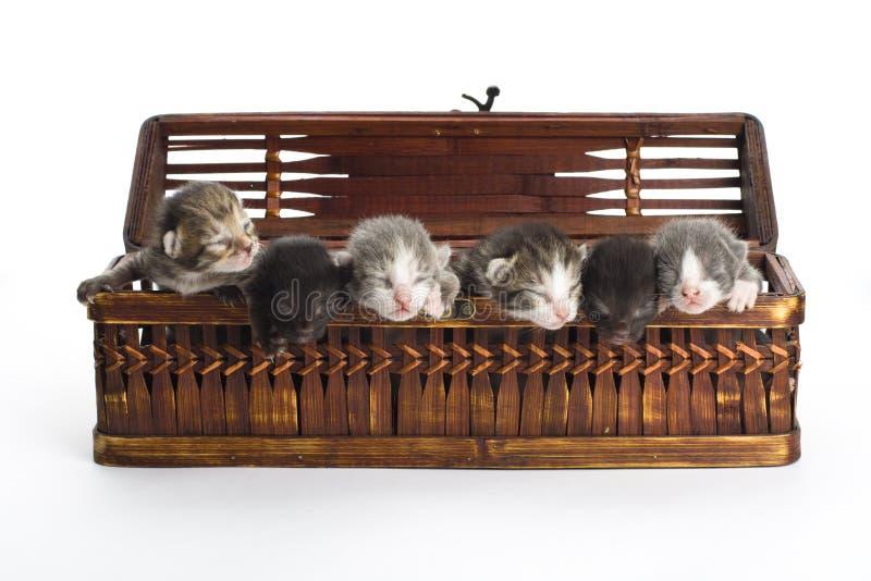 Blind kittens in the basket.
