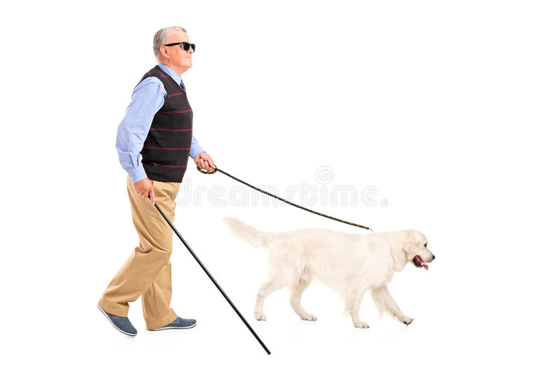 Blind man moving with walking stick and his dog. Full length portrait of a blind man moving with walking stick and his dog, on white background royalty free stock photography