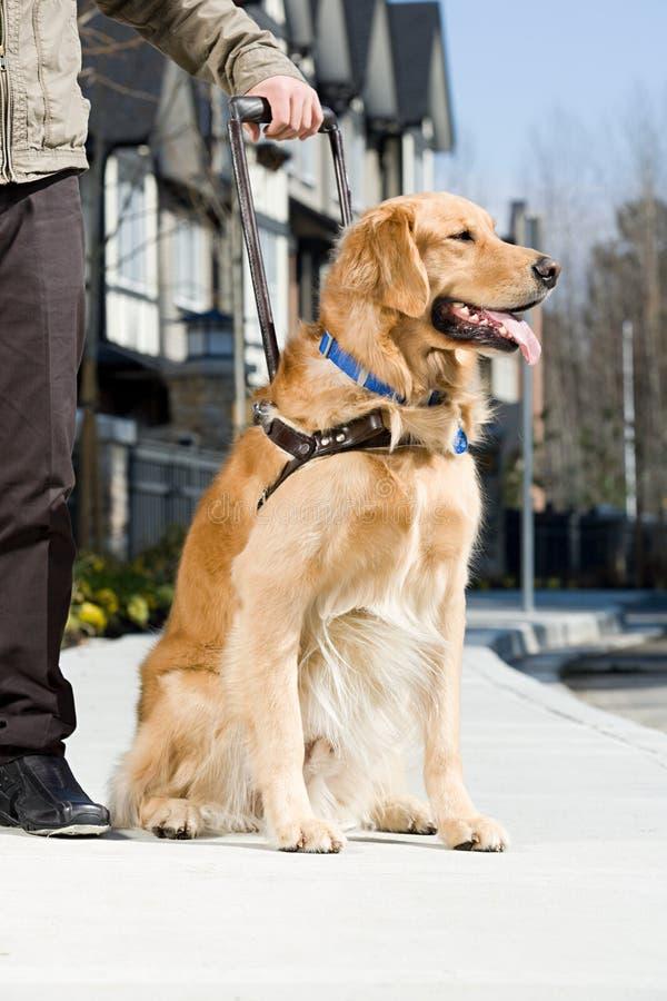 Blind man och en handbokhund arkivbild