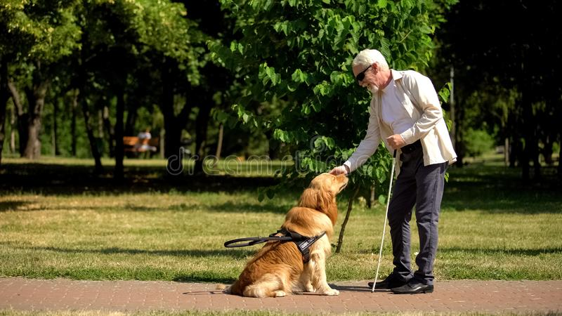 Blind man trainende geleidehond in het park, geeft gehoorzaamheidsopdrachten, stoornis royalty-vrije stock afbeelding