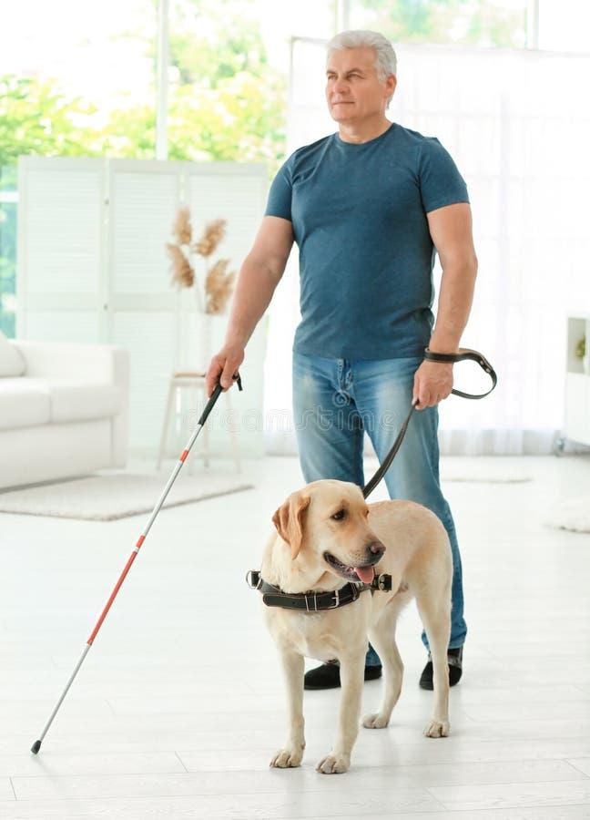 Download Blinde met gidshond stock afbeelding. Afbeelding bestaande uit helping - 107702085