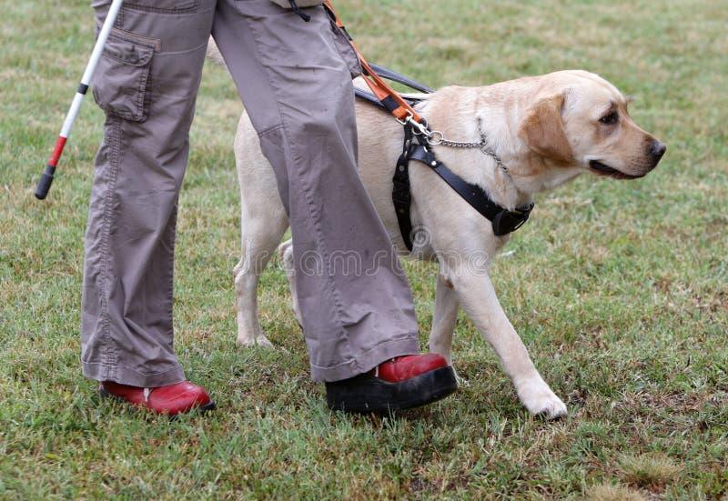 Blinde persoon die met haar gidshond lopen royalty-vrije stock afbeelding