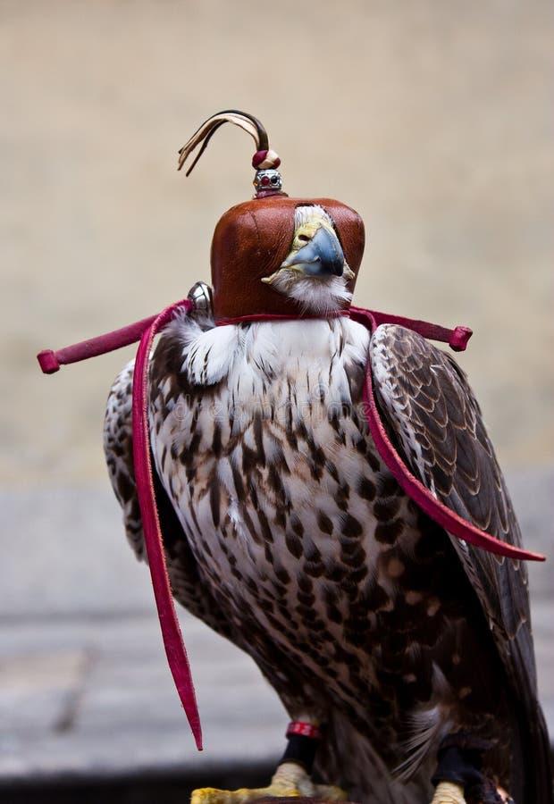 Blinded hawk