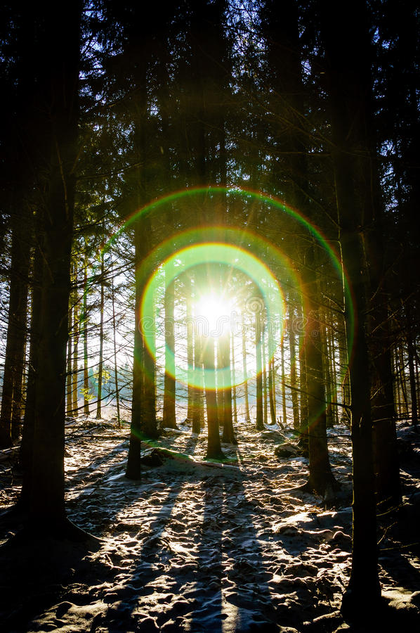 Blinding Flare In Dark Forest Royalty Free Stock Photo