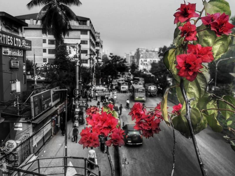 Blindless färg fotografering för bildbyråer