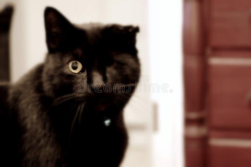 blinka för katt royaltyfri bild