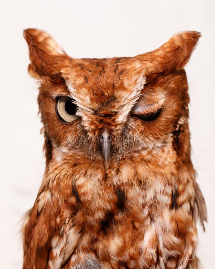 Blinka owlen arkivbilder