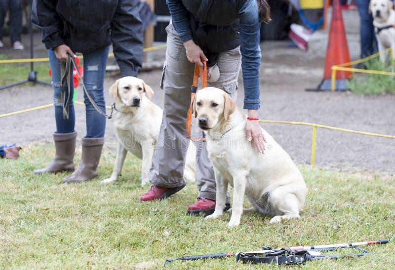 Blint folk med deras handbokhundkapplöpning royaltyfri foto