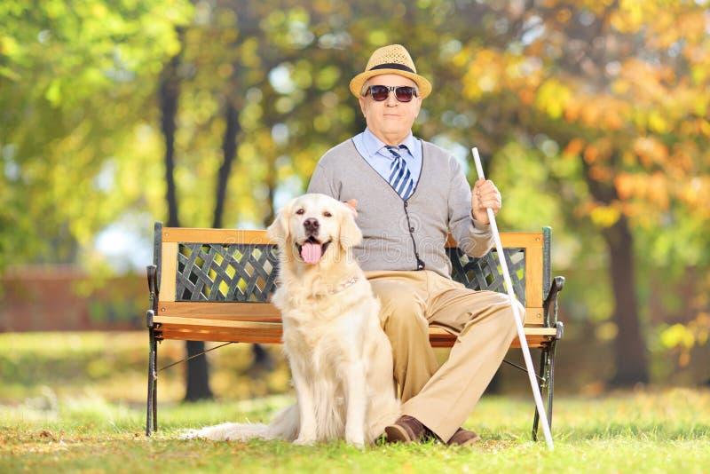 Blint gentlemansammanträde för pensionär på en bänk med hans hund, i en medeltal royaltyfria bilder