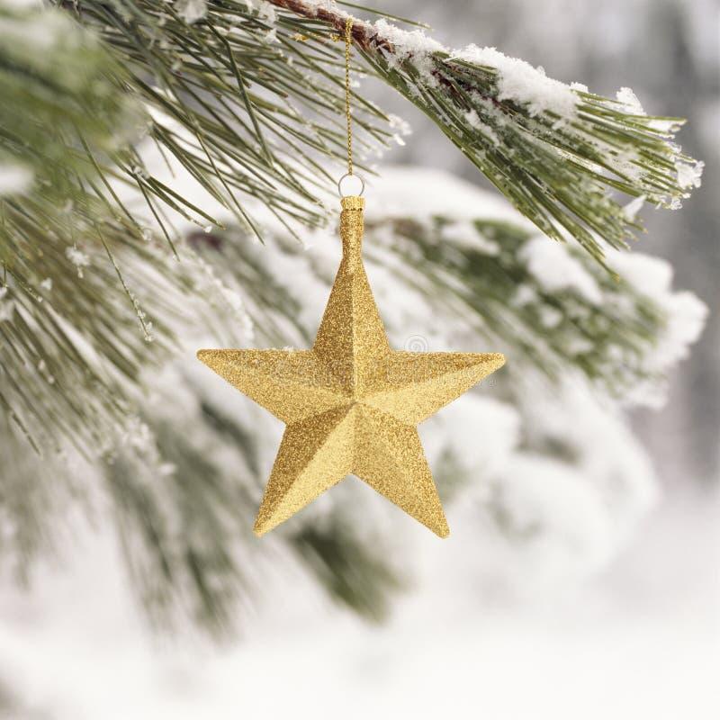 Bliskie zamknięcie złotej gwiazdki, ozdoby wiszącej z gałęzi śnieżnej sosny Piękne, proste, naturalne fotografia stock