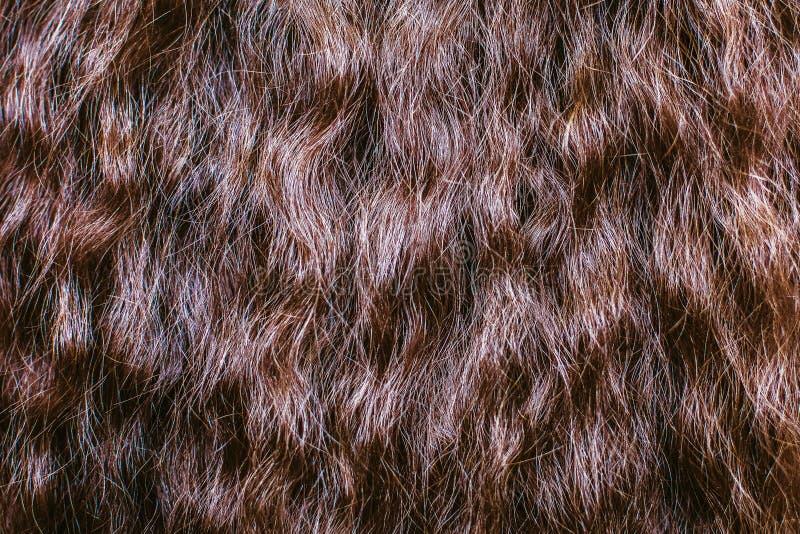 blisko brązowe włosy tekstury i tło fotografia stock