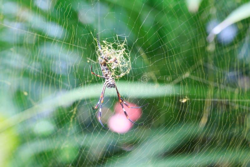 blisko dof makro pająka płytki pajęczynę, zdjęcia royalty free