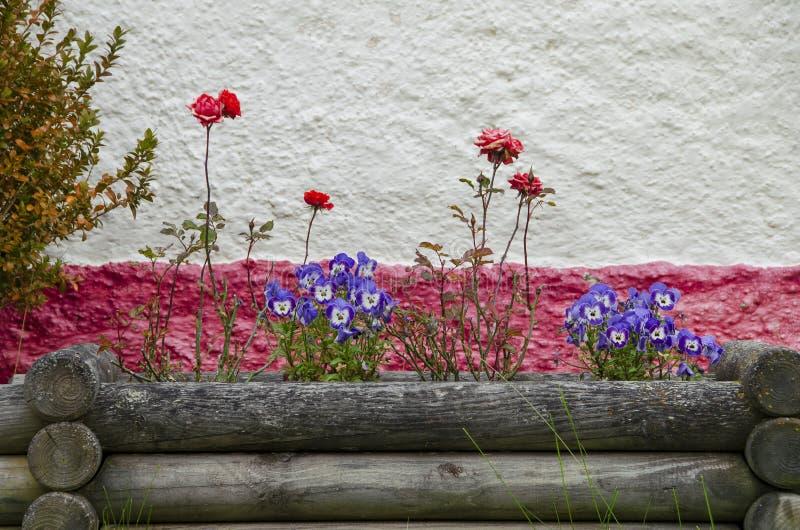 blisko kwiat łóżka Petersburgu święty Rosji, zdjęcie royalty free