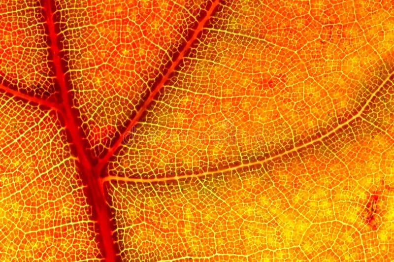 blisko mgławy jesienny liść. obraz royalty free