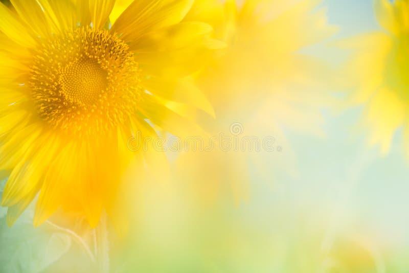 blisko tła słonecznik, fotografia royalty free