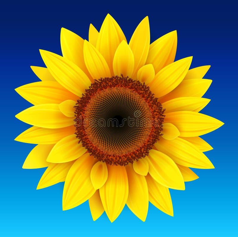 blisko tła słonecznik, ilustracja wektor