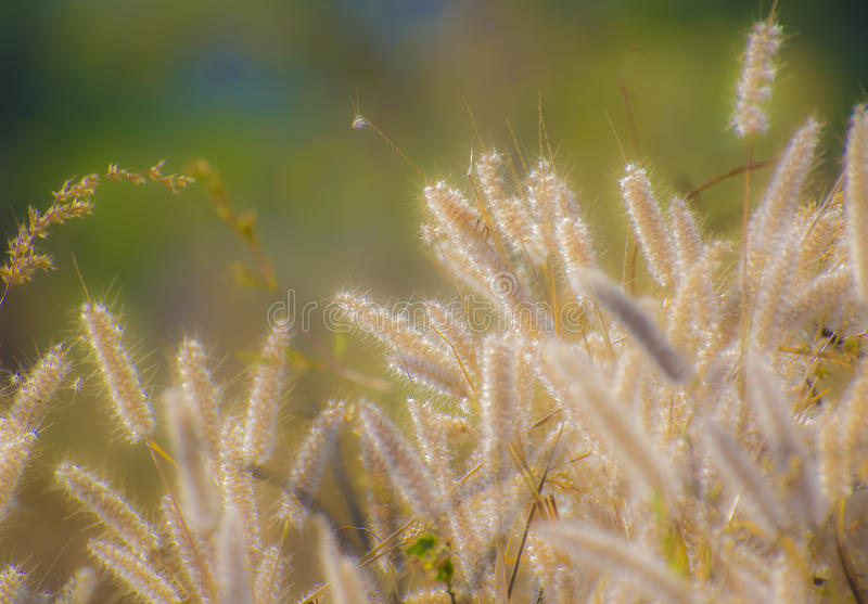 Bliss. Sparkling Grass in Sunlight giving a feeling of bliss royalty free stock photography
