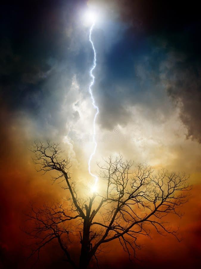 blixt slågen tree arkivfoto