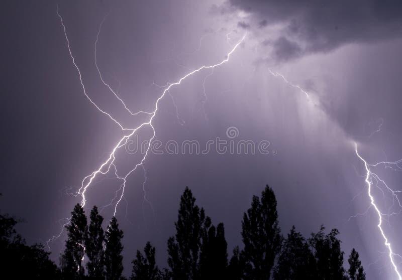 blixttrees fotografering för bildbyråer