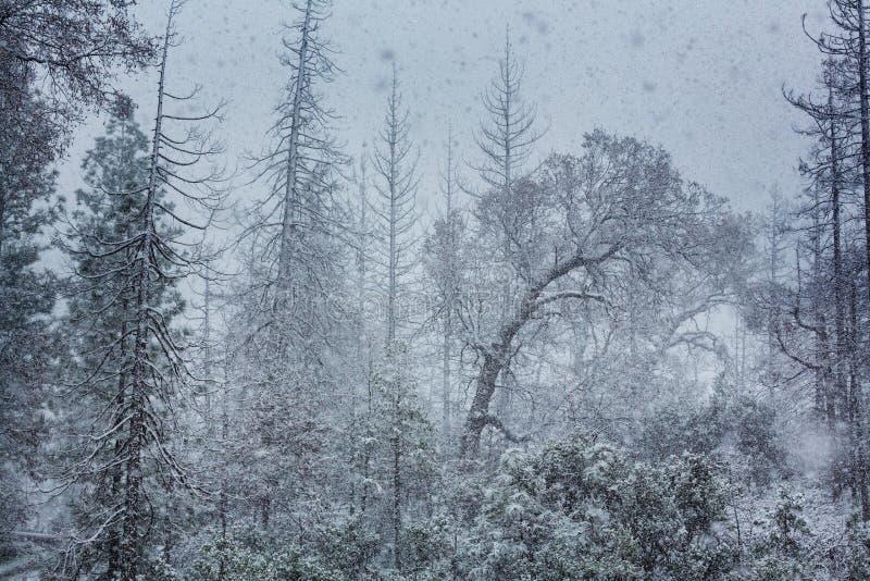 blizzard photos stock