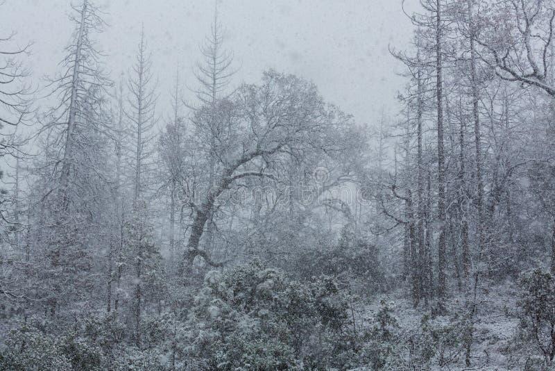 blizzard royalty-vrije stock fotografie