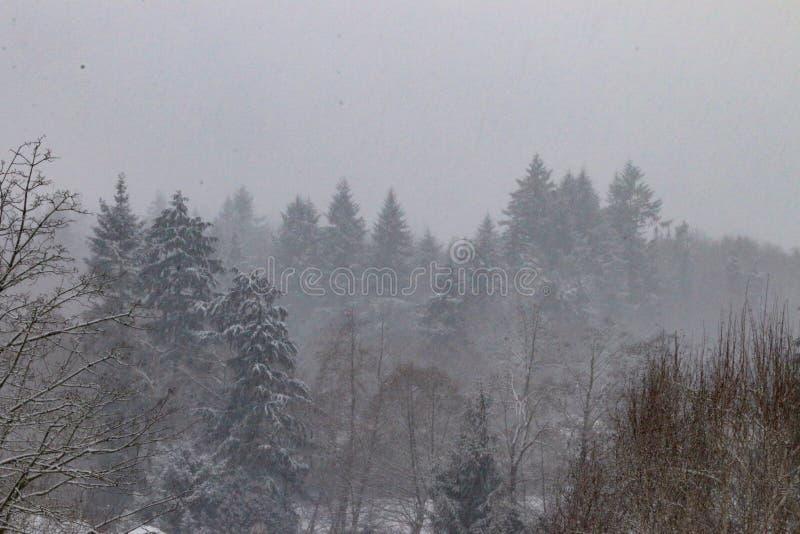 Download Blizzard image stock. Image du île, tomber, neige, arbres - 87702179