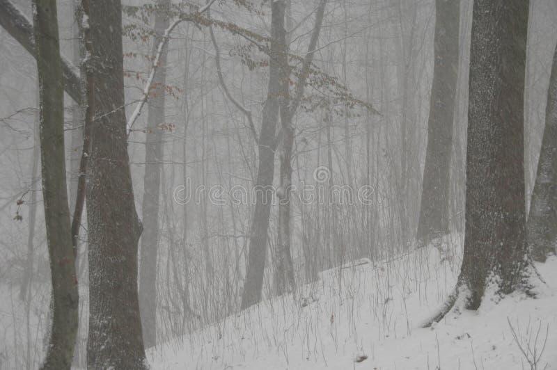 Blizzard in het bos royalty-vrije stock afbeelding