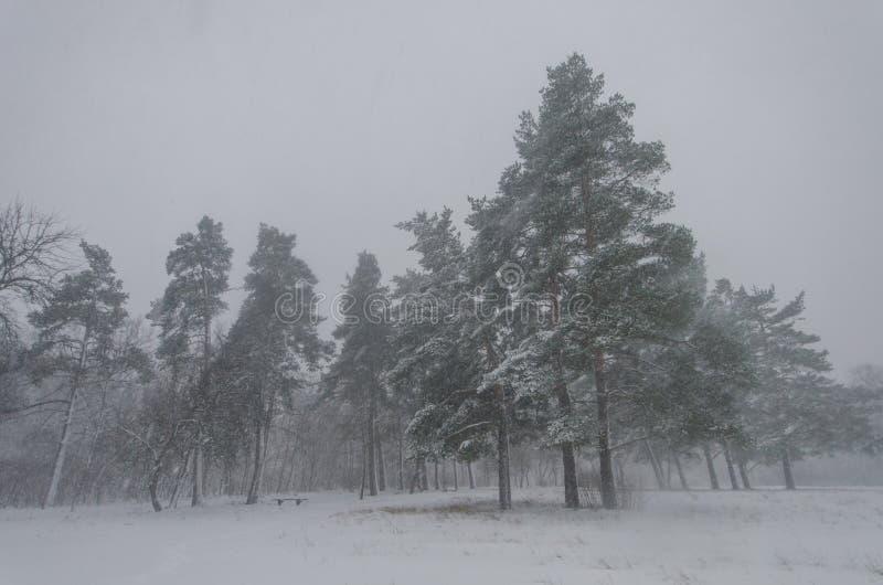 Blizzard nevado no parque imagem de stock
