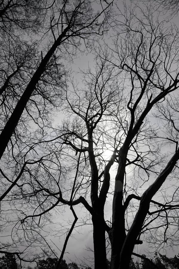 Bloße Bäume lizenzfreie stockfotografie