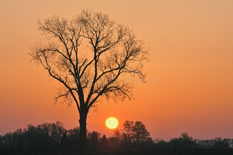 Bloße Bäume am Sonnenaufgang lizenzfreie stockfotos