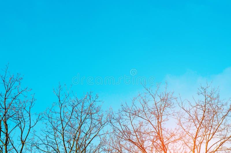 Bloße Bäume und Hintergrund des blauen Himmels Bild von bloßen Bäumen im spr lizenzfreies stockbild