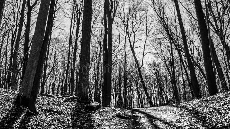 Bloße Bäume und Schatten lizenzfreie stockfotografie