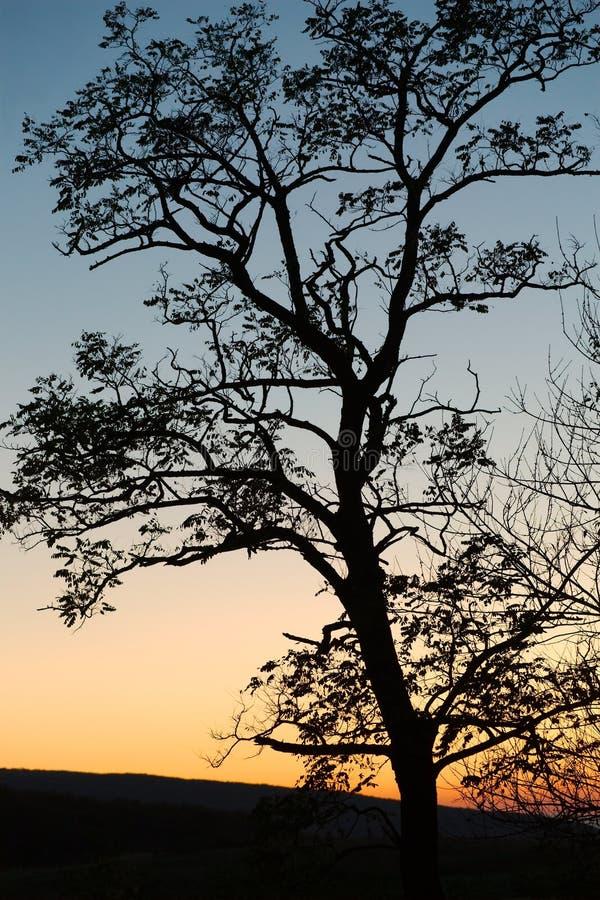 Bloße Baumschattenbilder stockbilder